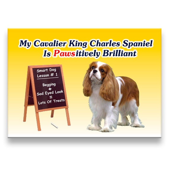 Cavalier King Charles Spaniel Pawsitively Brilliant Fridge Magnet No 2