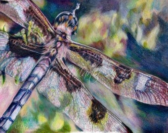 Dragonfly Colored Pencil Painting Print