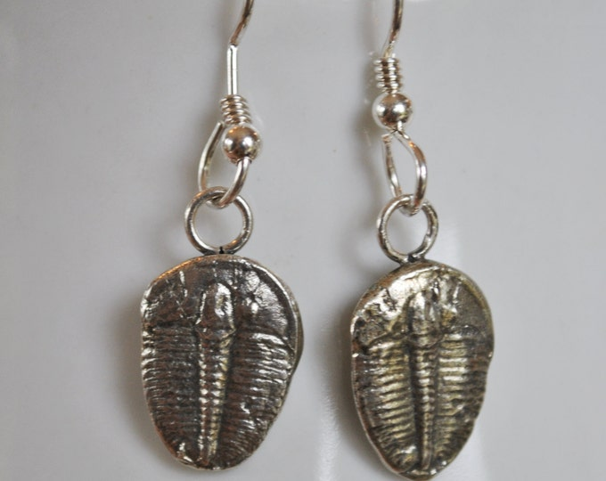 Trilobite Fossil Earrings made of sterling silver