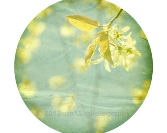 Shabby Chic Decor, Nature Photo, Mint, Teal, Leaves, Yellow, Spring Photography, Flower Branches Round Image on an 8x10 inch Print - Eponine
