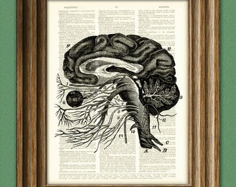 Nerves of the Brain medical illustration beautifully upcycled dictionary page book art print