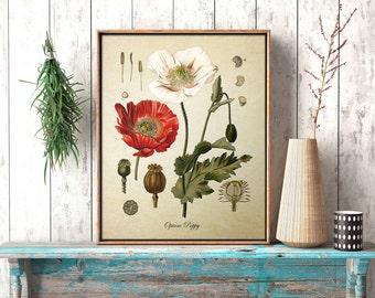 Botanical Print, Opium Poppy Print, Home Decor, Opium Poppy Botanical, Red Poppy Botanical Print, Poppy Art Reproduction FL063