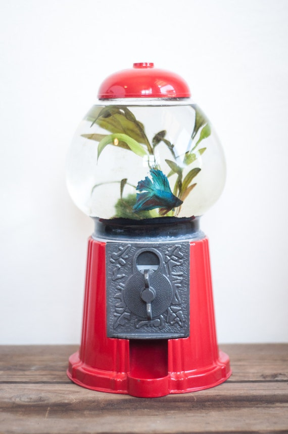 Items similar to gumball machine fish tank repurposed for Gumball fish tank
