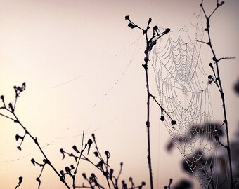 Spider Web Photography, Nature Photo Print, Purple Tone Cob Web Picture, Lavender Dew Drop Cob Web Home Decor, Horizontal Wall Art