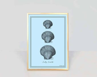 Seashells print-ocean wall art-seaside print-coastal wall art-coastal decor-home decor-beach decor-nautical print-NATURA PICTA