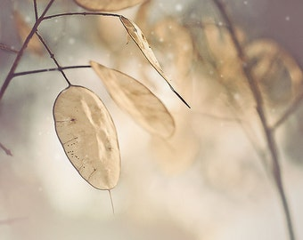 Nature Photography, leaves, winter, neutral, woodland decor, snow print, rustic, forest photo, wall art