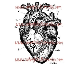 """Corazon Anatomico / Anatomical Heart """" Art Print by Laura Gomez - Mexican Colorful Art - Red, Black Brown, Sepia, Pink Black or White Heart"""