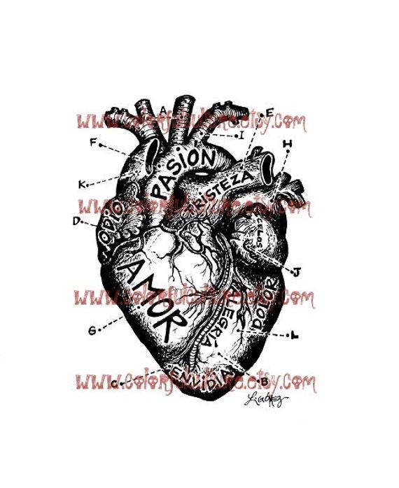 Corazon Anatomico / anatómico corazón lámina de arte por