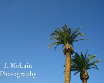 "Photography print - ""More Vegas Palm Trees"""