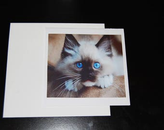 Sealpoint Balinese Kitten 5x5 Notecard with Envelope