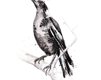 Australian Magpie **Limited Edition** A3, A2 & A1 bird watercolour illustration giclee art print