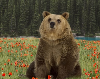 Brown bear digital background