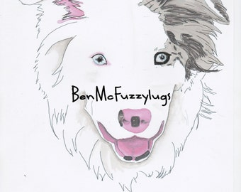Custom dog drawing - example Blue Merle Border Collie Dog Portrait . Digital file. Personalised Border Collie Art