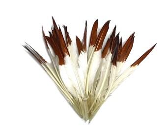 Plumes d'aigle 1/4 kg - brun à pointe blanche pointeur gros plumes de canard (en vrac): 4312