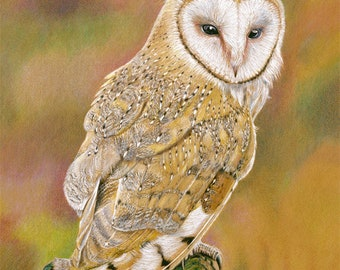 Barn Owl Giclée Art Print. Best in Show. 8 x 10 or 11 x 14 inches. Colored Pencil