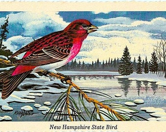 Vintage New Hampshire Postcard - Purple Finch ... State Bird of New Hampshire -- Artist Signed, Ken Haag (Unused)