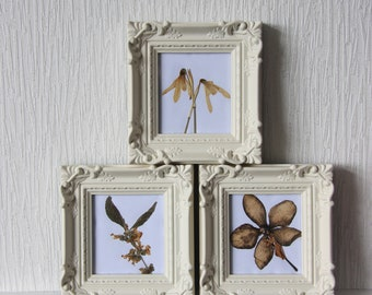 Set of 3 small framed pressed flowers, affordable, housewarming gift, new home gift, one of a kind, ooak,flowers, botany, cottage art.