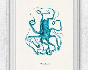 Vintage octopus n1- sea life print- Turquoise octopus - vintage natural history SAS038