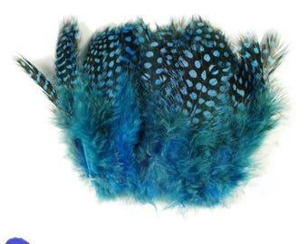 set of 10 Guinea fowl feathers