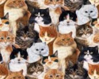 FELINE FINE-219 Cats