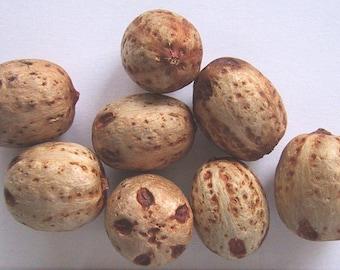 10 Choerospondias axillaris Seeds, Lapsi Seeds