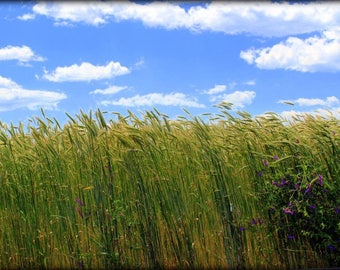 Fine Art Photography, Green Grass Blue Skies, Matted & wrapped