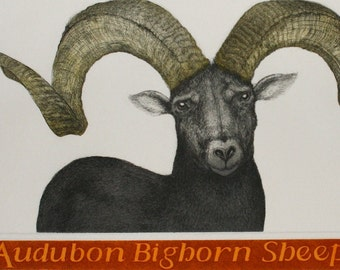 Audubon Bighorn Sheep - Etching and Aquatint by D.R. Wakefield