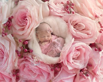 Newborn Digital Backdrop/ Prop / Photography /  Fresh flowers (Just Roses)