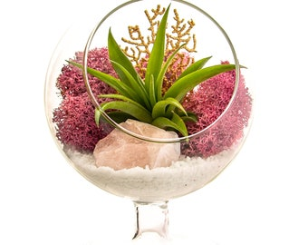 "Air Plant Terrarium with Rose Quartz / 4"" Round Glass Pedestal / Angel's Garden"