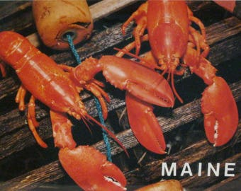 Lobster's Trap in Maine Photo
