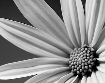 Black & White Art Photography Flowers  Professional photography Photo interiors Digital Download #1-9