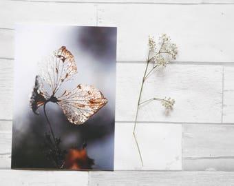 Flower photo card | greetings card | birthday card | nature photo | photo print |  hydrangea | card for her | blank card | art | easter card