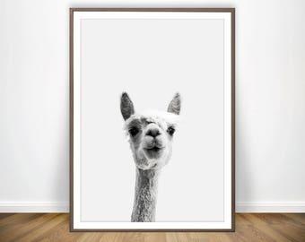 Llama Print Alpaca Poster Llama Decor Alpaca Gift Llama Art Alpaca Print Llama Poster Lama Wall Art Alpaca Decor Lama Print Alpaca Printable