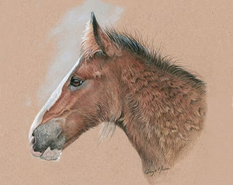 Heavy Horse Foal - Limited Edition Giclee Print from an Original Painting