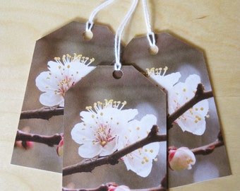 Blossom gift tags pack of 3