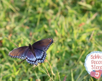 Butterfly rests in front a vibrant field of green grass // Nature photography (digital download)