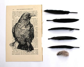 Raven Print, Bird Print on Vintage Book Page, Gothic Print
