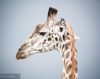 """Photo Print: """"Up Close and Personal"""" - Giraffe, Serengeti National Park, Tanzania"""