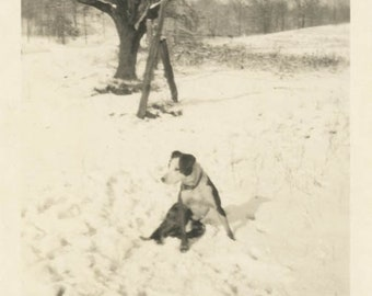 Vintage photo 1932 Dog Lays in Snow Looks off at Something