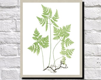 Fern Illustration, Fern Print, Antique Botanical Print, Vintage Plant illustration, Fern Wall Art, Gymnocarpium Dryopteris, 0499
