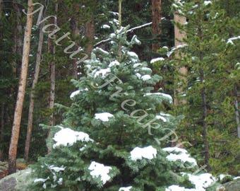 Pine Tree- Snow- Mountain- Rock- Nature- Digital Download- Landscape- Decor- Wall Art- Winter Forest- Winter Landscape Print-Forest Digital