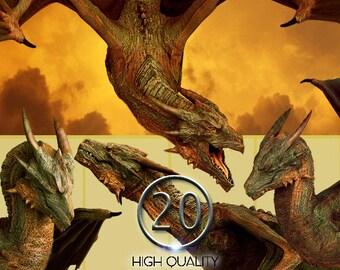 20 PNG Dragon poses