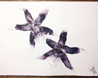 Orchids (print)