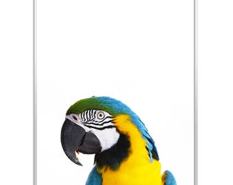 Parrot Print | Instant Download | Bird Print | Parrot Art | Bird Art | Parrot Wall Art | Tropical Decor | Parrot Photo | Parrot Poster