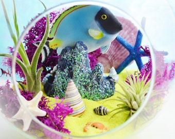 """Just Keep Swimming Beach Terrarium Kit ~ 7"""" Air Plant Terrarium Kit ~ Coastal Living Beach House Decor ~ Blue Fish ~ Aquarium Beach Gift"""
