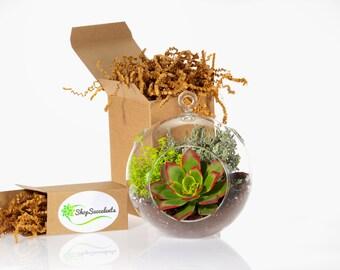 Globe Succulent Terrarium, Large - terrarium kits, hanging terrarium, glass terrarium, hanging plants, hanging planter, succulent gifts