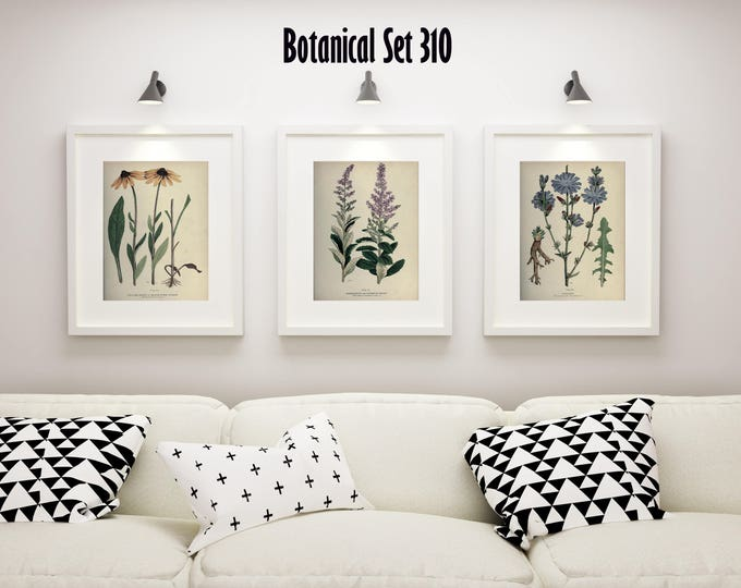 Botanical Print Set of 3, Wildflower Wall Art, Antique Botanical Wall Art, Wildflower Prints, Modern Farmhouse Decor, Housewarming Gift