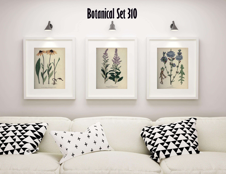 Botanical Print Set Of 3 Wildflower Wall Art Antique