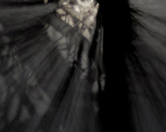 Dreamscape no15. Moonlight & Shadows, abstract moonlight print, shades of grey photo, monochrome art, abstract trees, fragments of light