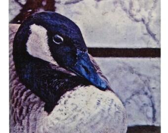 "Tavenor's Cackling Goose 4"" Art Tile Coaster Bird Lover"